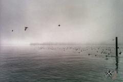 Traunsee im Nebel
